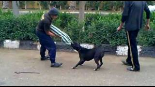 Cairo K9 Academy (15).mp4