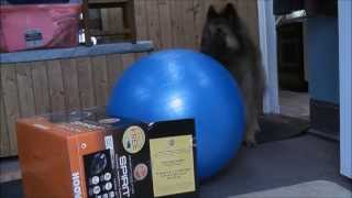 Dog Packs Ball - With Tammys Dog Training