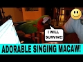 Macaw Singing And Dancing, Rocky Rocks Out To
