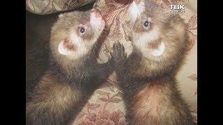 В Красноярске в одной квартире проживает более 100 животных