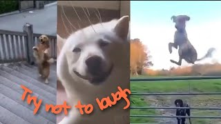 Funny Dog Memes Videos | Try Not To Laugh At This Ultimate Funny Dog Memes Compilation
