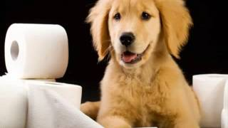 Easiest Dogs To Potty Train