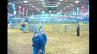 Junior Market Barrow Show Day 2 - Broadcast - Competitive Events Rodeo Austin