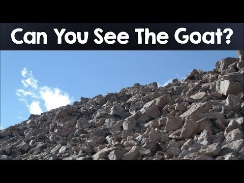 Nobody Can See All The Hidden Animals । Optical Illusions । Brain Teasers [#4]