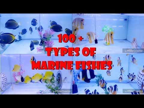 100 + Types Of Marine Fishes | Imported Marine Fish | Utekar Fisheries Marine Section