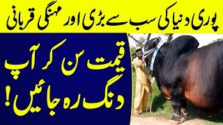 1 Million Dollars Cow for Qurbani MashAllah | Islamic Solution