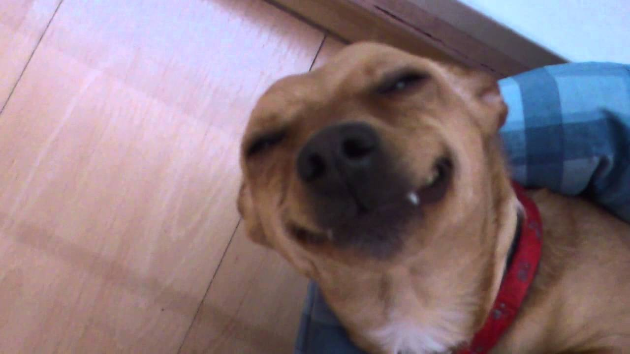 Image of: Teeth Funny Dog Pics Funny Smiling Dog Our Punta From Slovakia Youtube