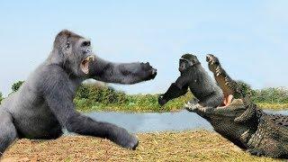 OMG! Crocodile attack Baby Gorilla very quickly, Mother Gorilla rescue Baby failed