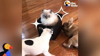 It's A Cat's World, Dogs Just Live In It | The Dodo