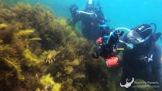 Rich & Hailey Leafy Sea Dragon Adventure