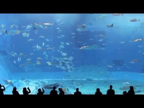 Okinawa Churaumi Aquarium The