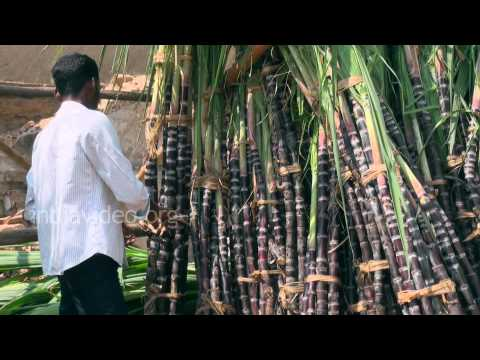 Sugar Cane Selling in Thanjavur