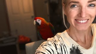 Bringing Home a New Bird | What Day One With a New Bird Looks Like!!!