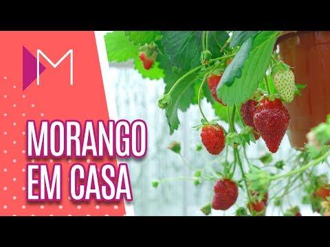Como plantar morango em casa - Mulheres (07/08/18)