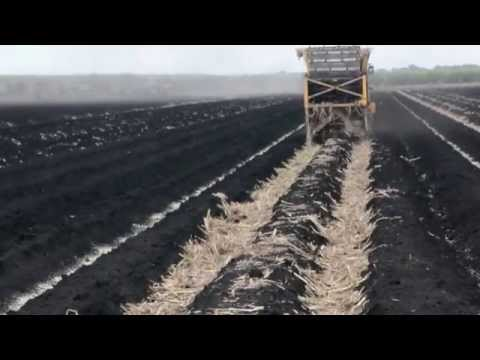Sugarcane Planting in the Everglades Agricultural Area