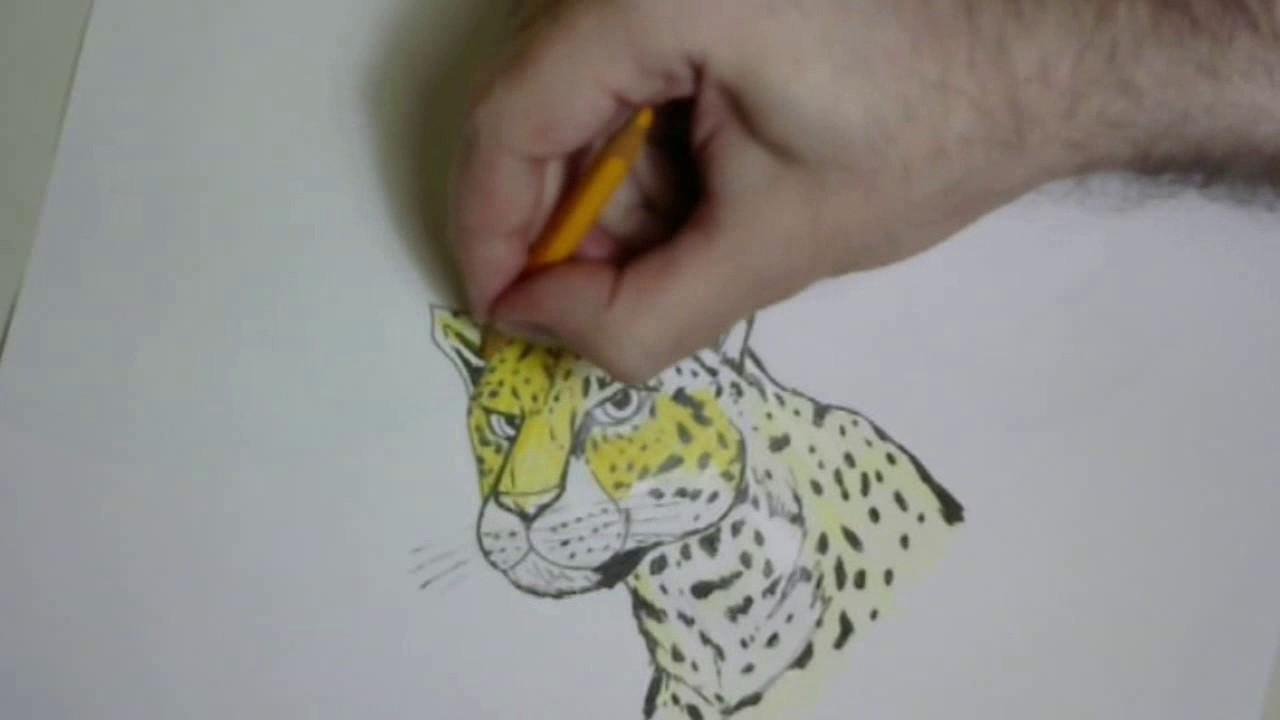 Como Desenhar Onca Pintada Youtube