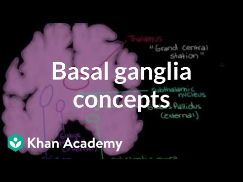 The basal ganglia - Concepts of the indirect pathway | NCLEX-RN | Khan Academy