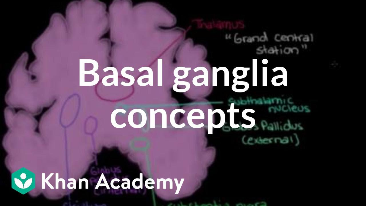 The Basal Ganglia Concepts Of The Indirect Pathway Video