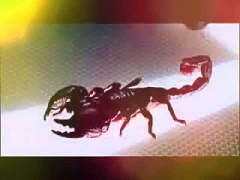 Камни для скорпиона - какие подходят по гороскопу девушке