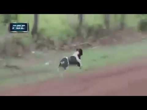 Perro afortunado en la carrera del Codasur