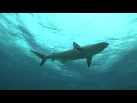 January Jones Swims with Sharks - YouTube