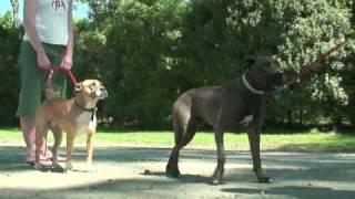 ZeroBites Dog Training, Wdv NZ. Tararua-Ashhurst-Manawatu-Wairarapa