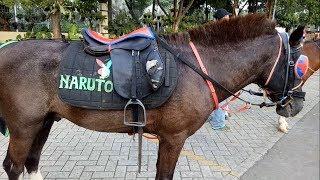 Naik Kuda Poni | Riding A Horse