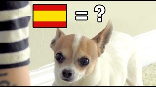 Spanish Lessons For Dogs #1 - Nic And Pancho