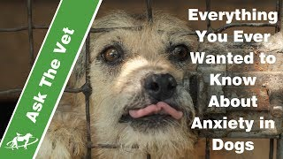 Everything You Ever Wanted to Know About Anxiety in Dogs- Companion Animal Vets