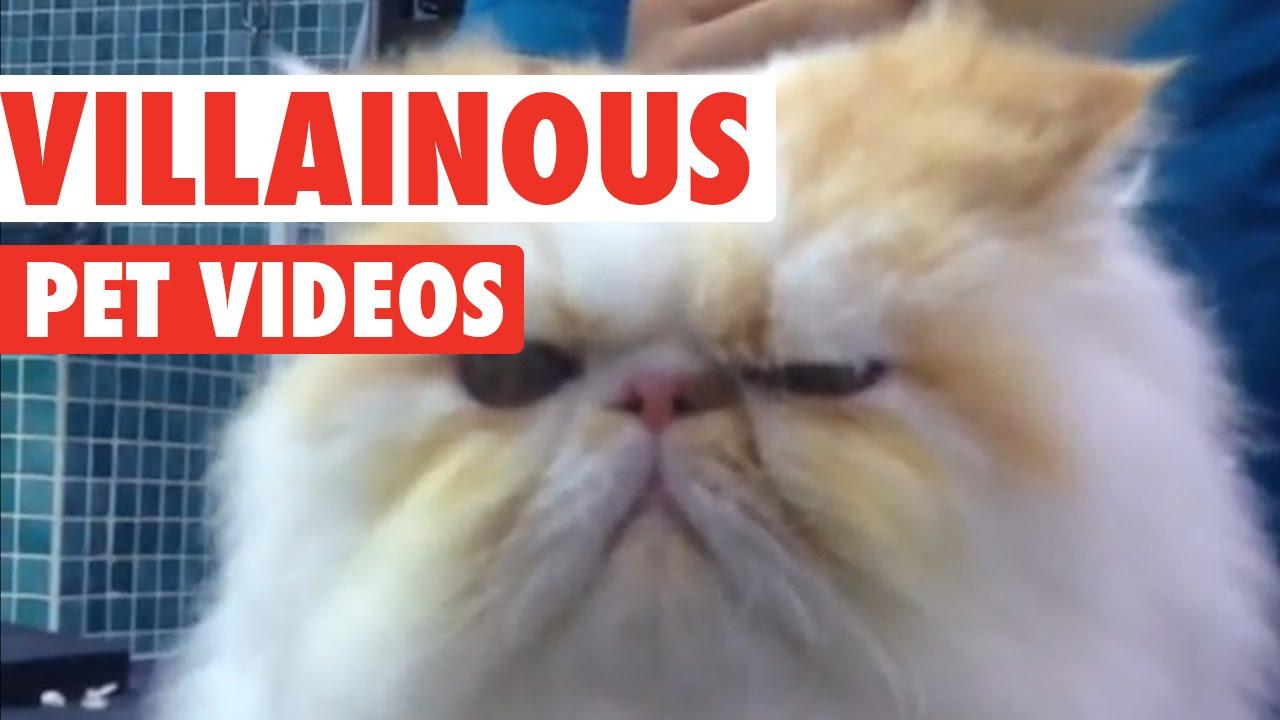 Villainous Pets Video Compilation