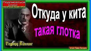 видео Откуда у кита такая глотка?