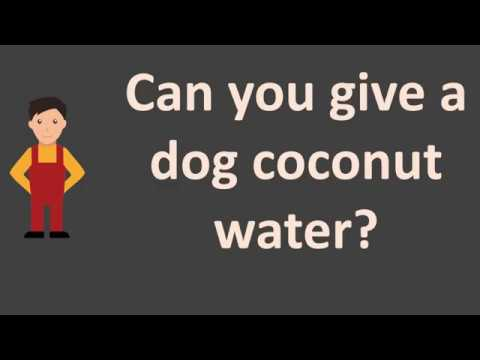 Can You Give A Dog Coconut Water ?