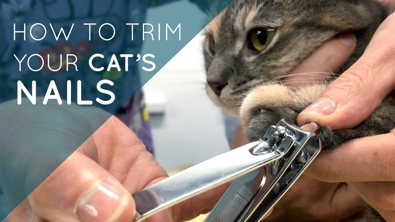 How to Trim Your Cat s Nails
