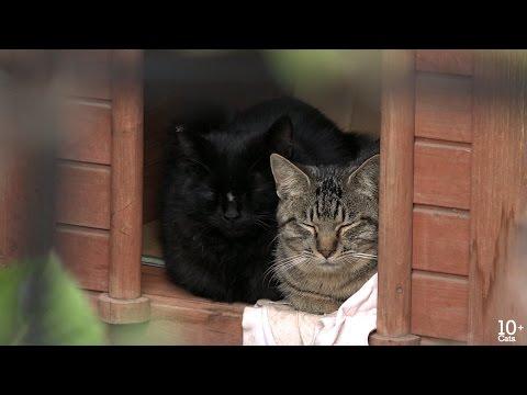 野良猫のTNR 地域猫として生きる