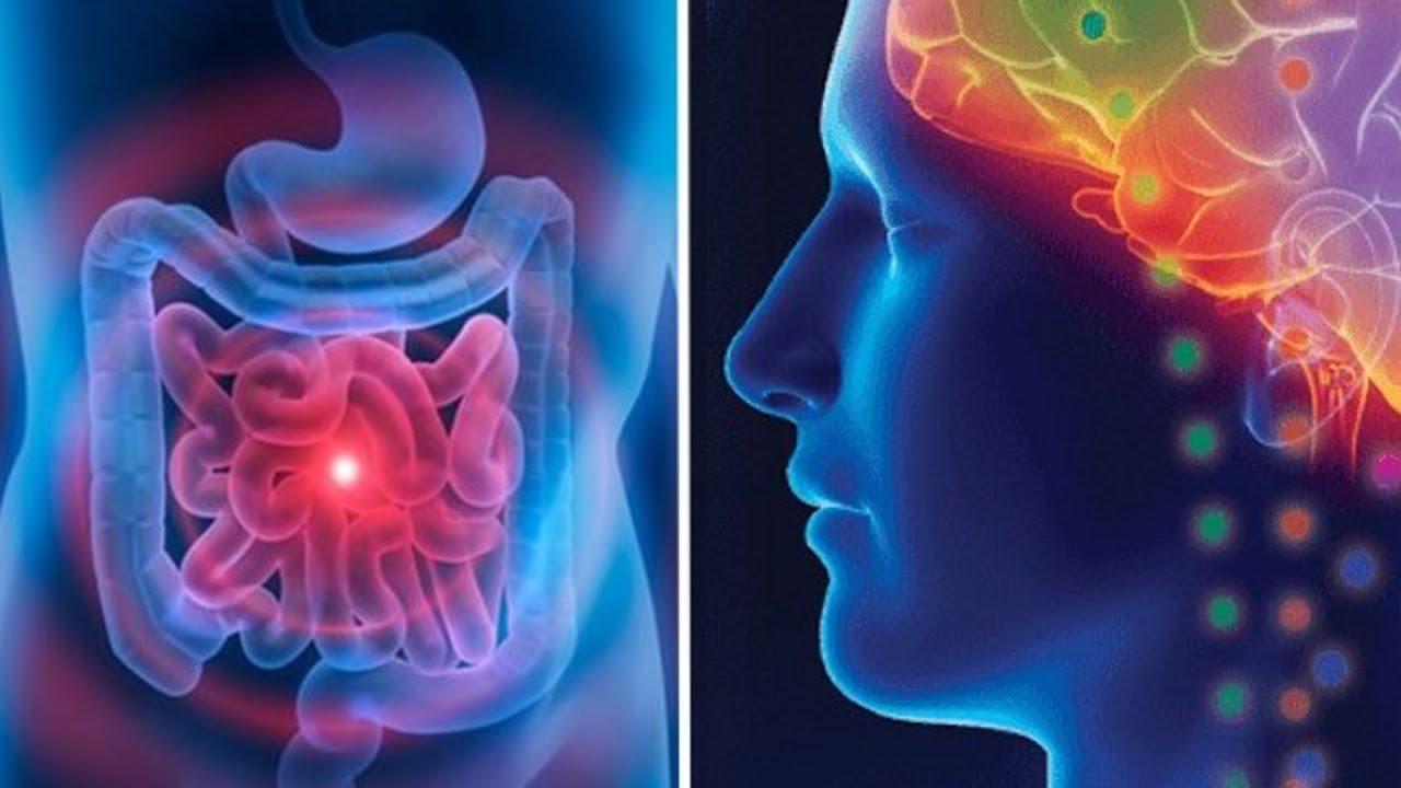 Wie die Darmflora das Gehirn krank macht - und wie sie es schützt