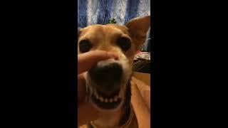 Chú chó bị chủ troll