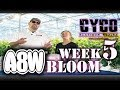 A8W Cyco Nutrients WK 5 Bloom Feed Chart How to SE1:EP8 (Official Video)