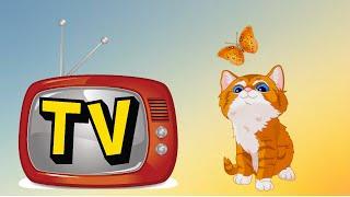 😻Реакция вислоухой кошки на телевизор #мультикипотелику #УЛЫБНИСЬ Забавные кошки! 😺
