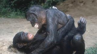 САМЫЙ ПОГАНЫЙ ЧЕРВЬ В МИРЕ? Сняли на камеру. Про животных
