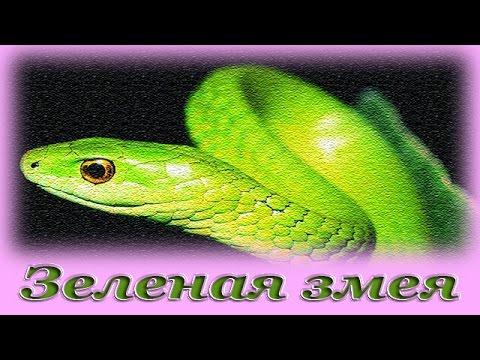 Сонник Змеи, к чему снятся Змеи во сне видеть