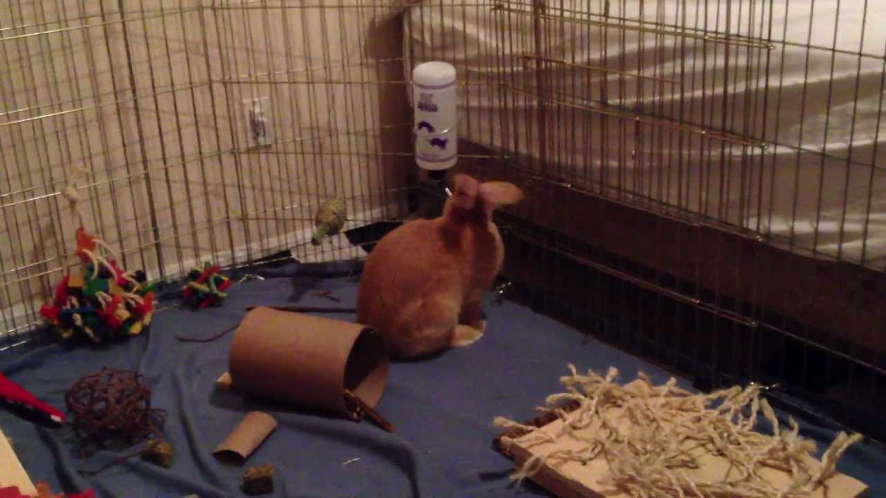 Getting Your Rabbit To Drink From Water Bowl To Water