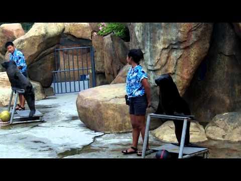 Sea lion show at Manila Ocean Park