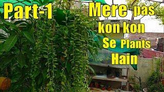 Mere Garden Main Kon Kon Se Plants Hain With Name \u0026 Price (Part-1)