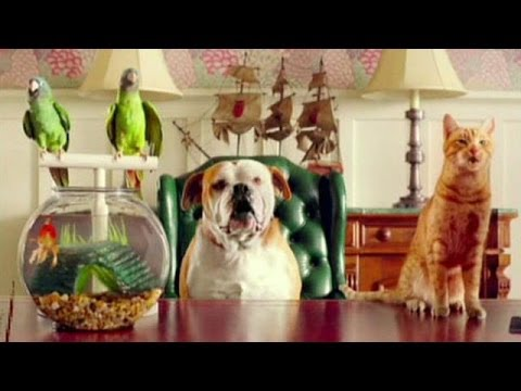 ObamaCare Ad Featuring Talking Animals Strikes Controversy