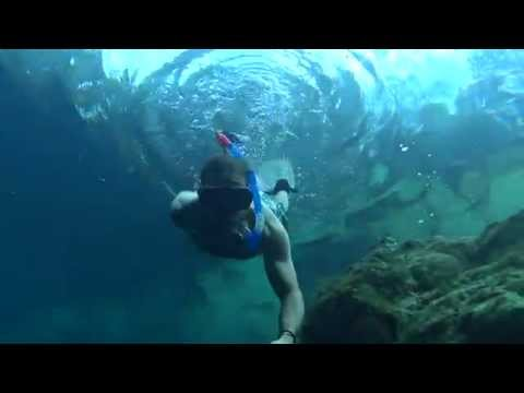 Freediving Florida: Royal Spring
