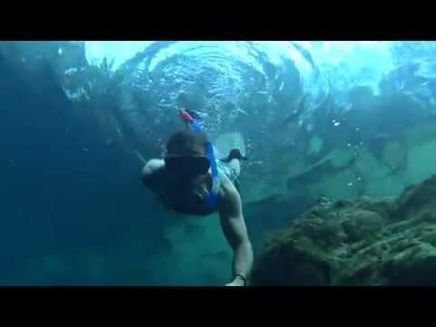 Freediving Florida: Royal Spring