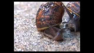 Snail Love Trail