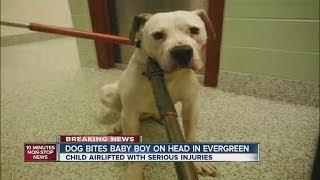 Dog bites baby boy on head in Evergreen