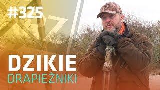 Darz Bór odc 325 - Dzikie drapieżniki