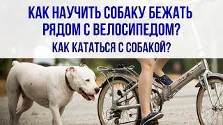 Как научить собаку бежать рядом с велосипедом? Как кататься с собакой? Собака и велосипед